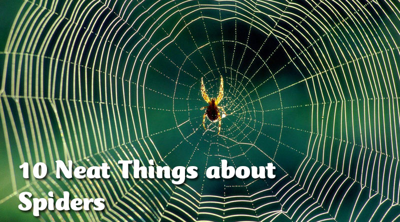 10 Neat Things about spiders