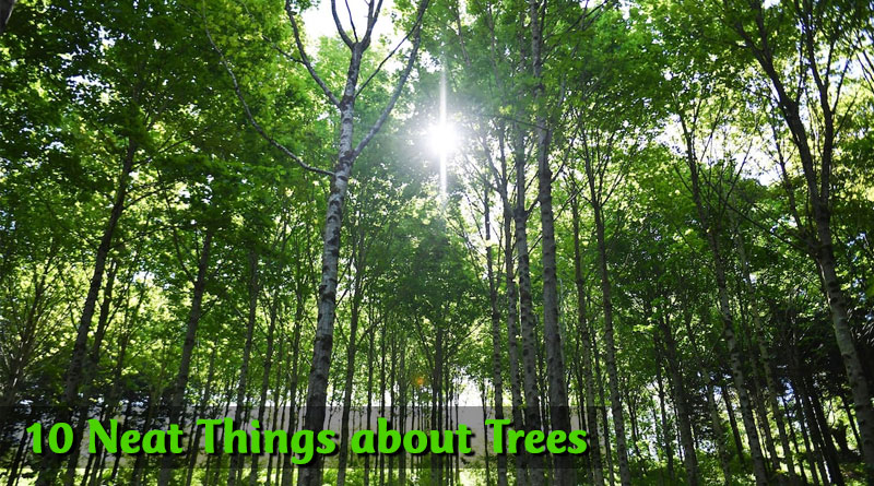 10 Neat Things about Trees