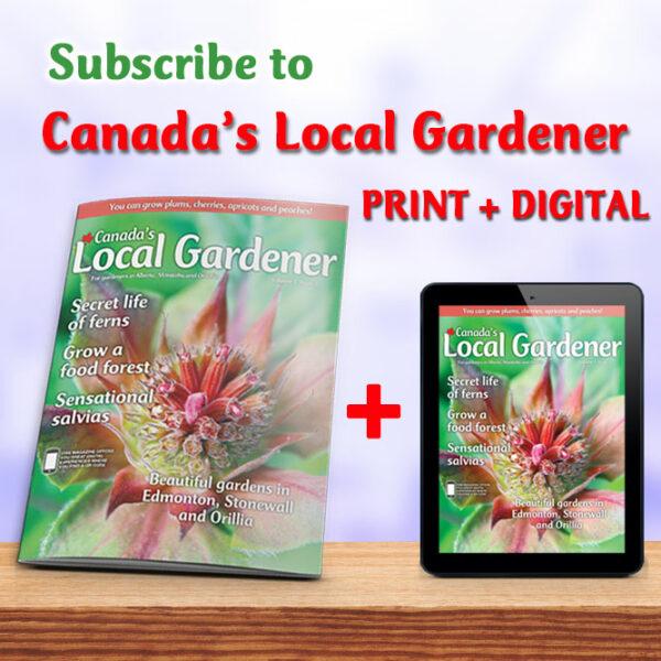 Print plus digital subscription