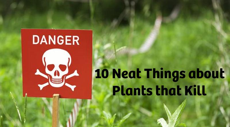 Plants that kill