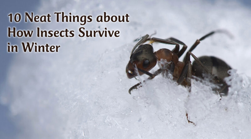 how insects survive winter