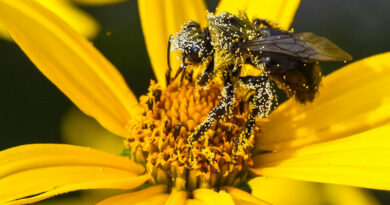 Pollen Magic