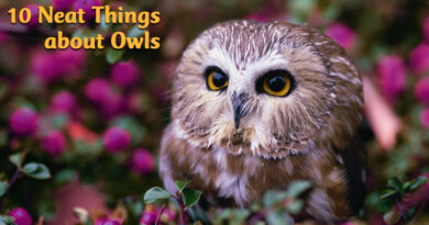 10 neat things about owls