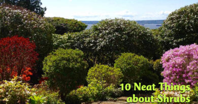 10 neat things about shrubs
