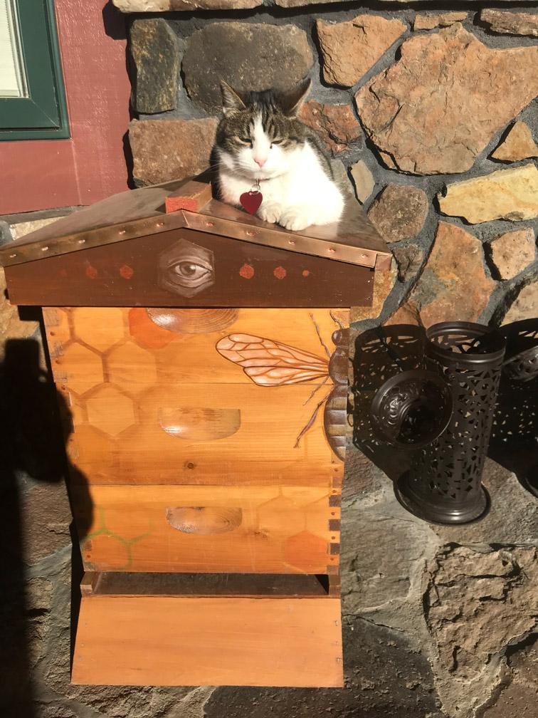 Cat at Almosta Farm Cove Oregon