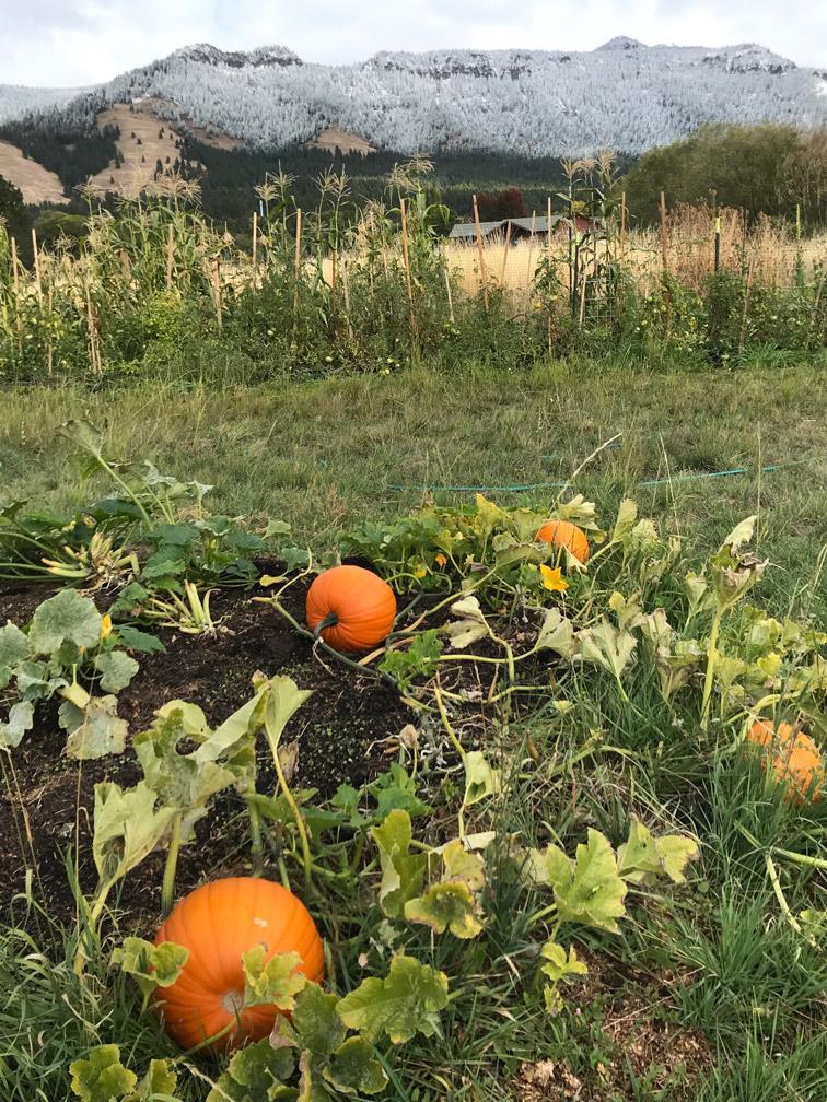 Pumpkin Patch at Almosta Farm