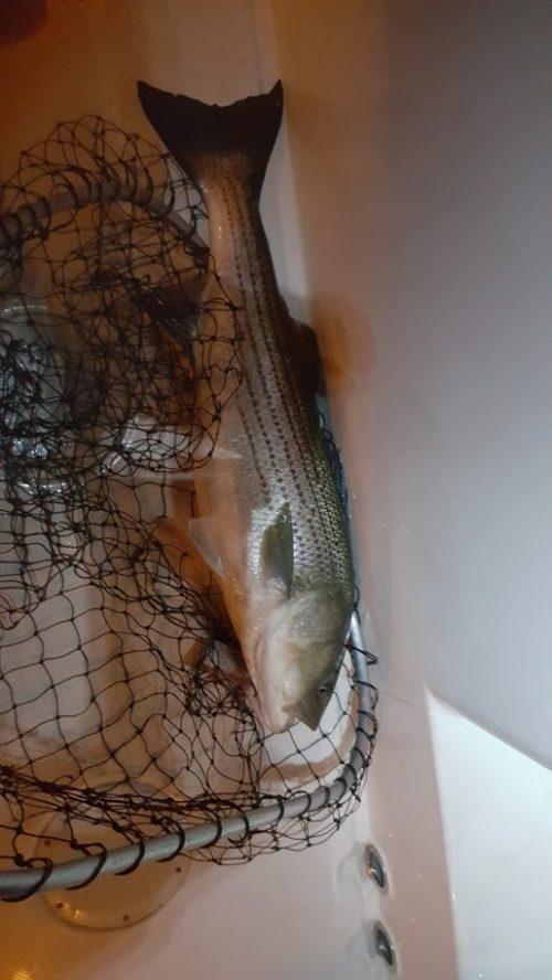 bass net