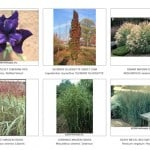 plant picture catalogue