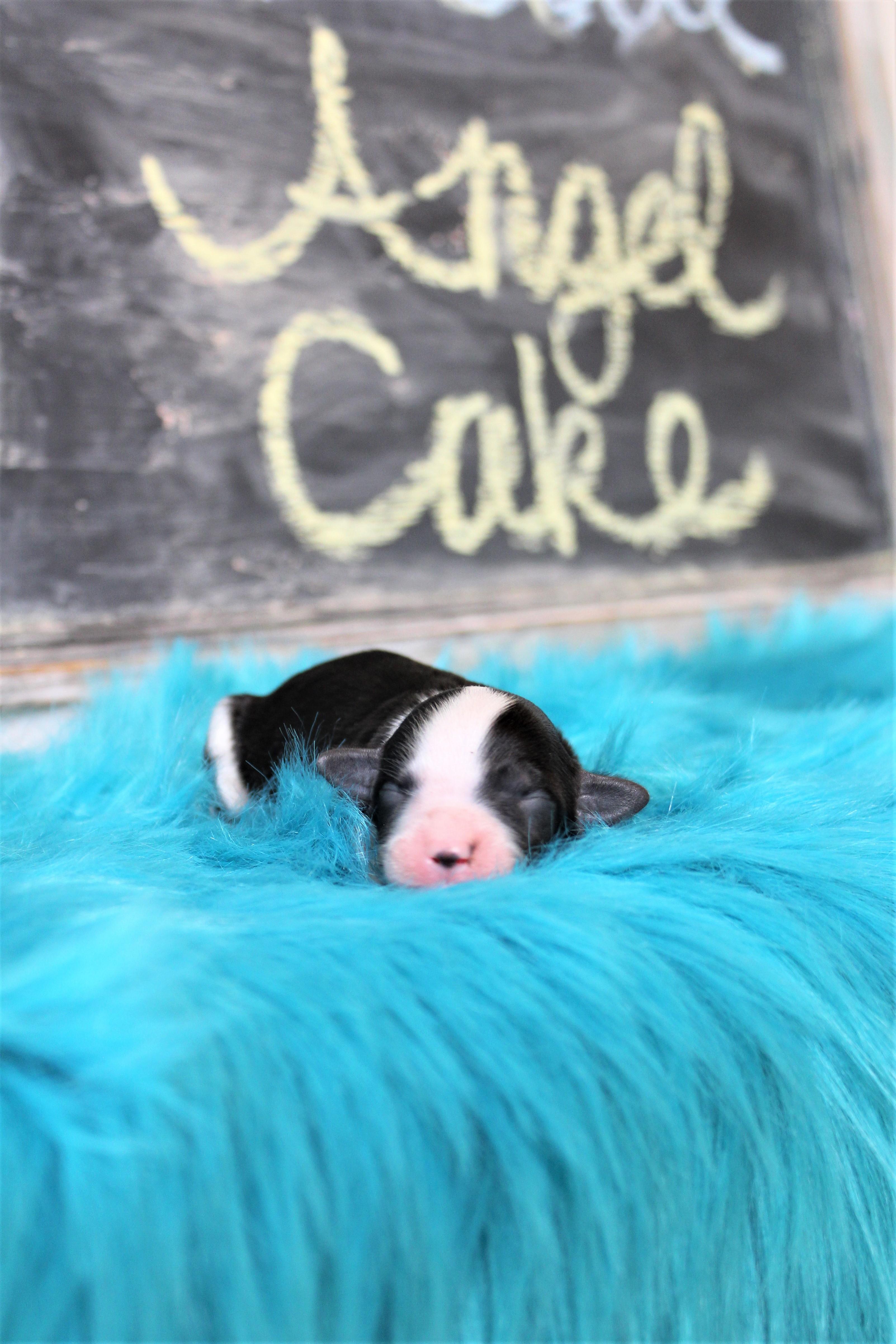 Angel Cake 1.2
