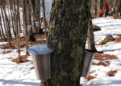 maple-syrup1