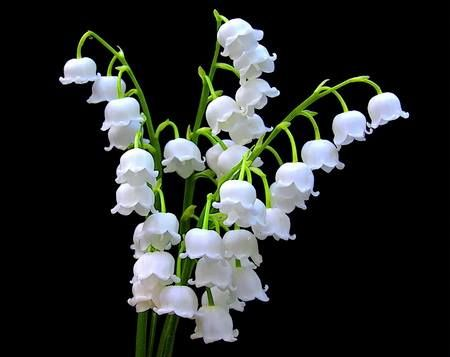 Flower of the Month – May Lily of the Valley
