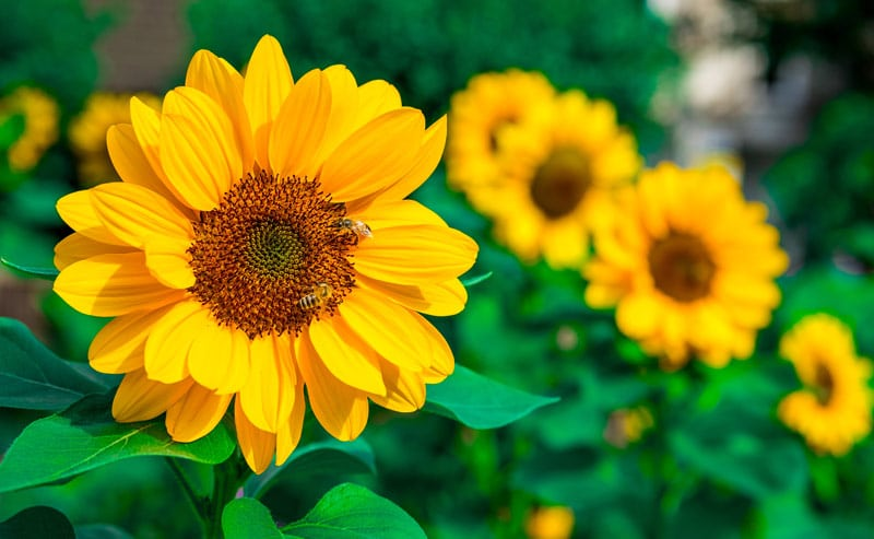 Plants for sun or shade – you pick!