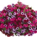 Grand Traverse Combination Hanging Basket