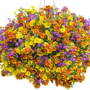 Irresistible Combination Hanging Basket