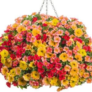 Joy Combination Hanging Basket