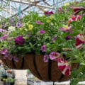 "Beaver Bark 16"" Combination Hanging Basket"
