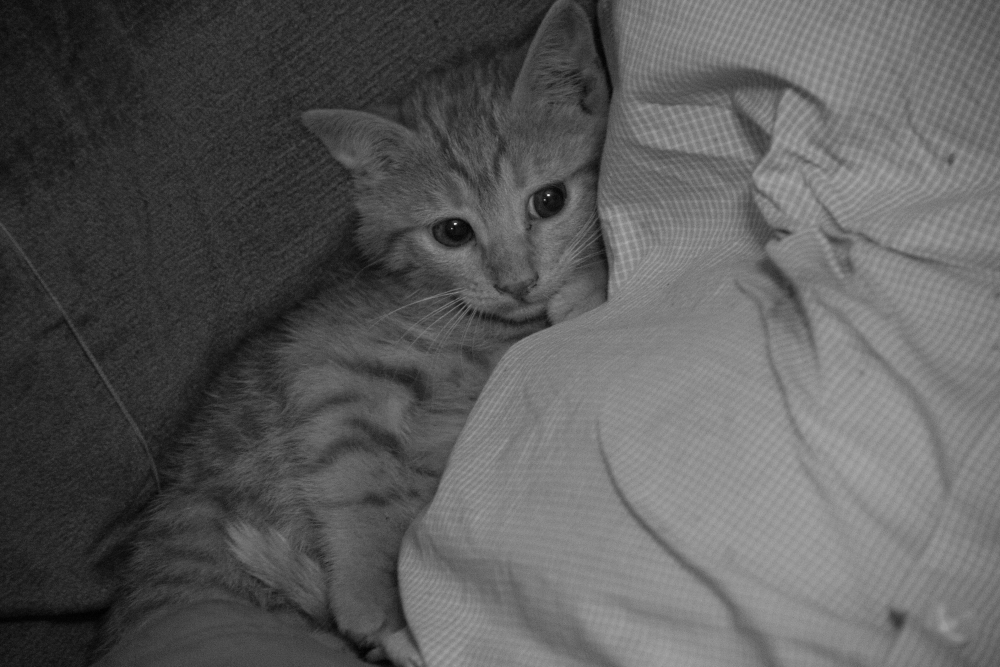 Little kitten became more comfortable. And around 10pm our house became quiet as our company trickled out and we settled in for the evening.