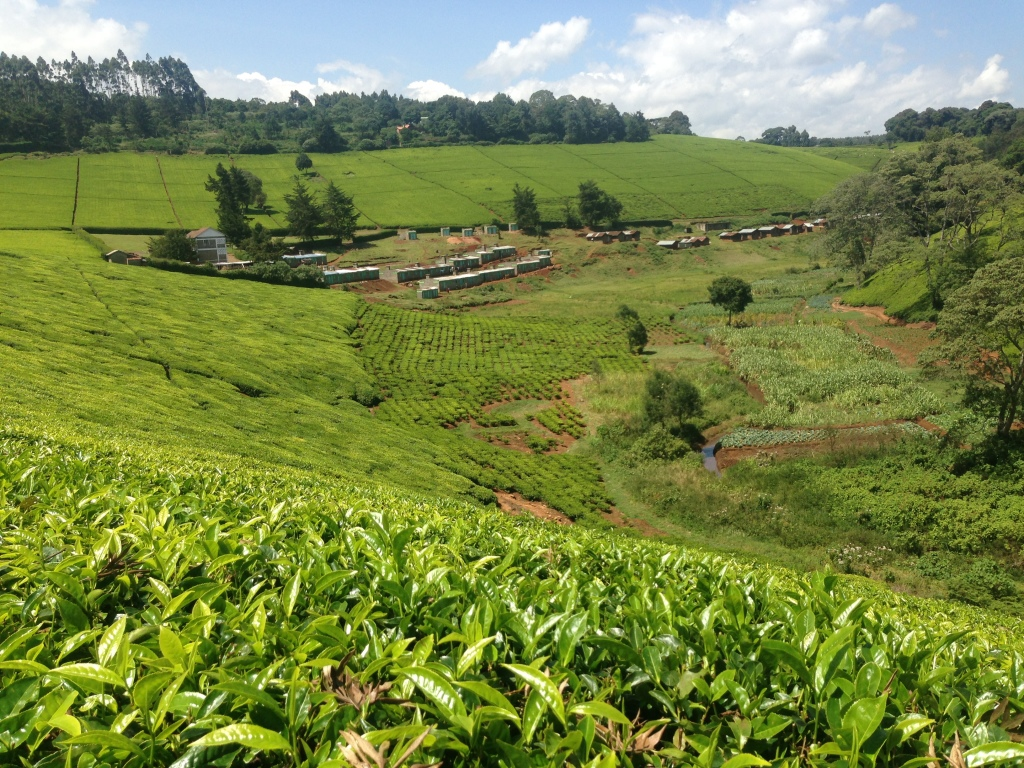 Beautiful walks through tea folds