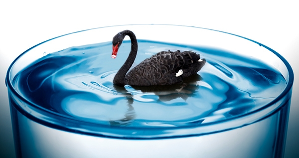 A black swan in the water?