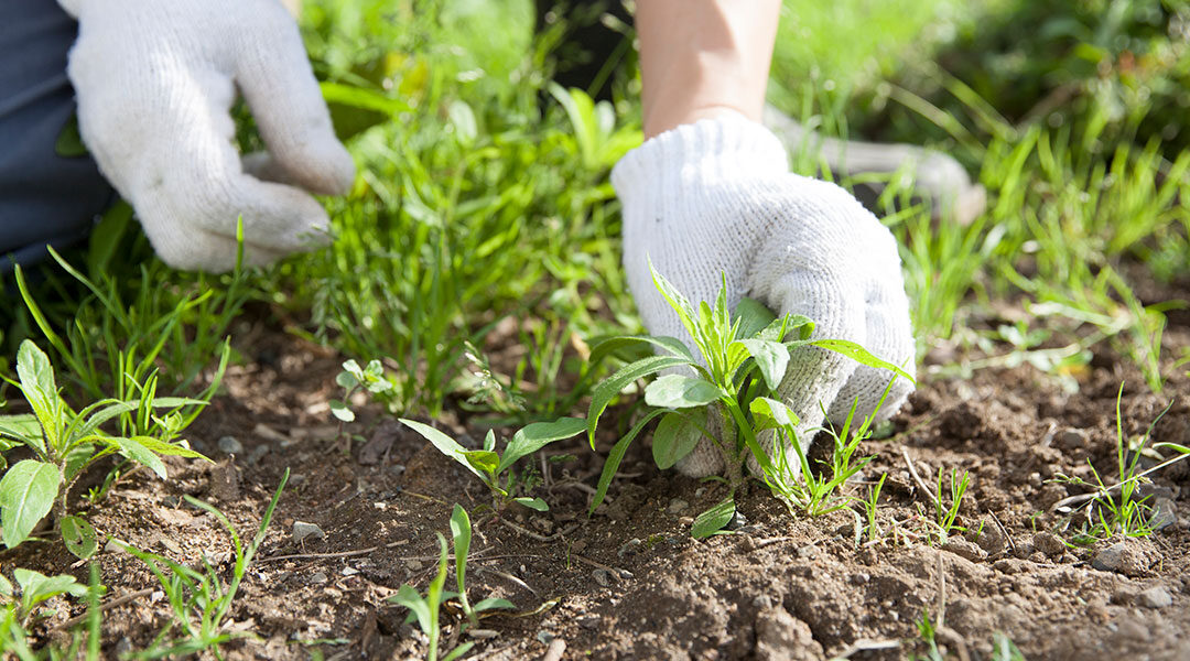 Cultivating the weeds