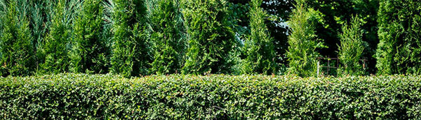 Care Program | Tree and Shrub Expert Service