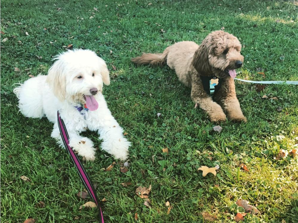 Stella and Scarlett