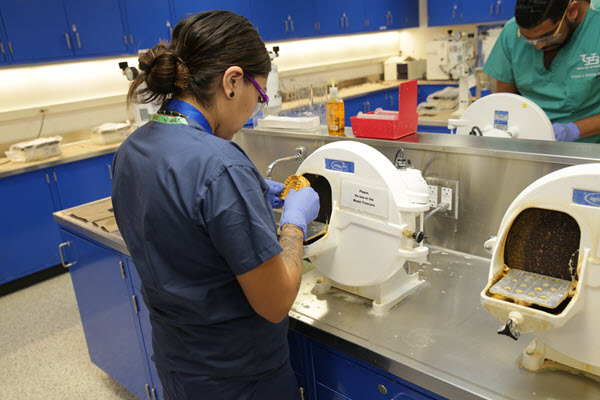 Jalisa Whitehorse trims a plaster model in the new pre-clinical lab in Squire Hall.