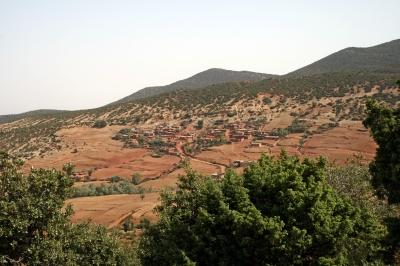 An Oasis in the Desert: Morocco's Argan Oil