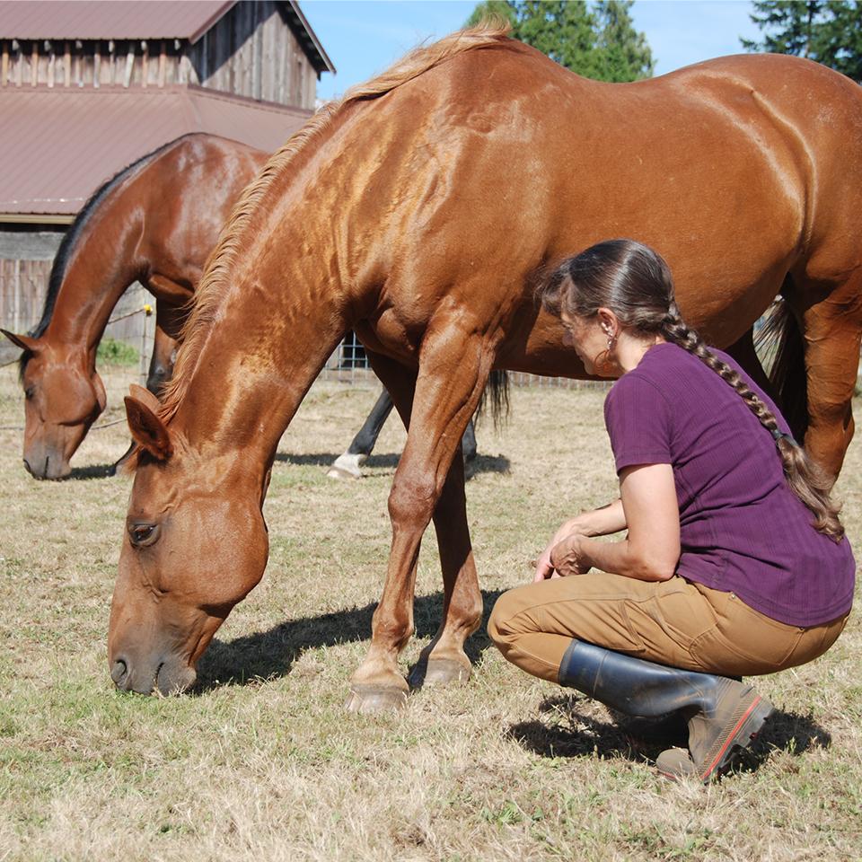Peaceful Horse, Animal Communication