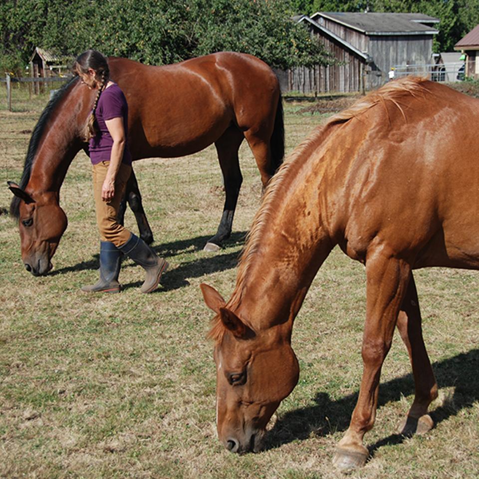 Peaceful Horse Workshop