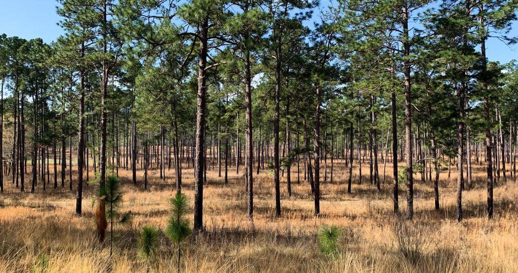 Land Management Quail Woods