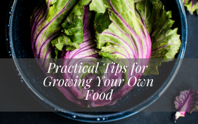 Practical Tips for Growing Your Own Food