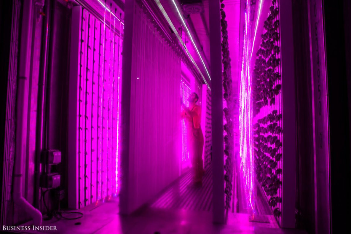 Kimbal Musk Elon S Brother Just Opened A Shipping Container Farm Compound In New York City Skyfarm