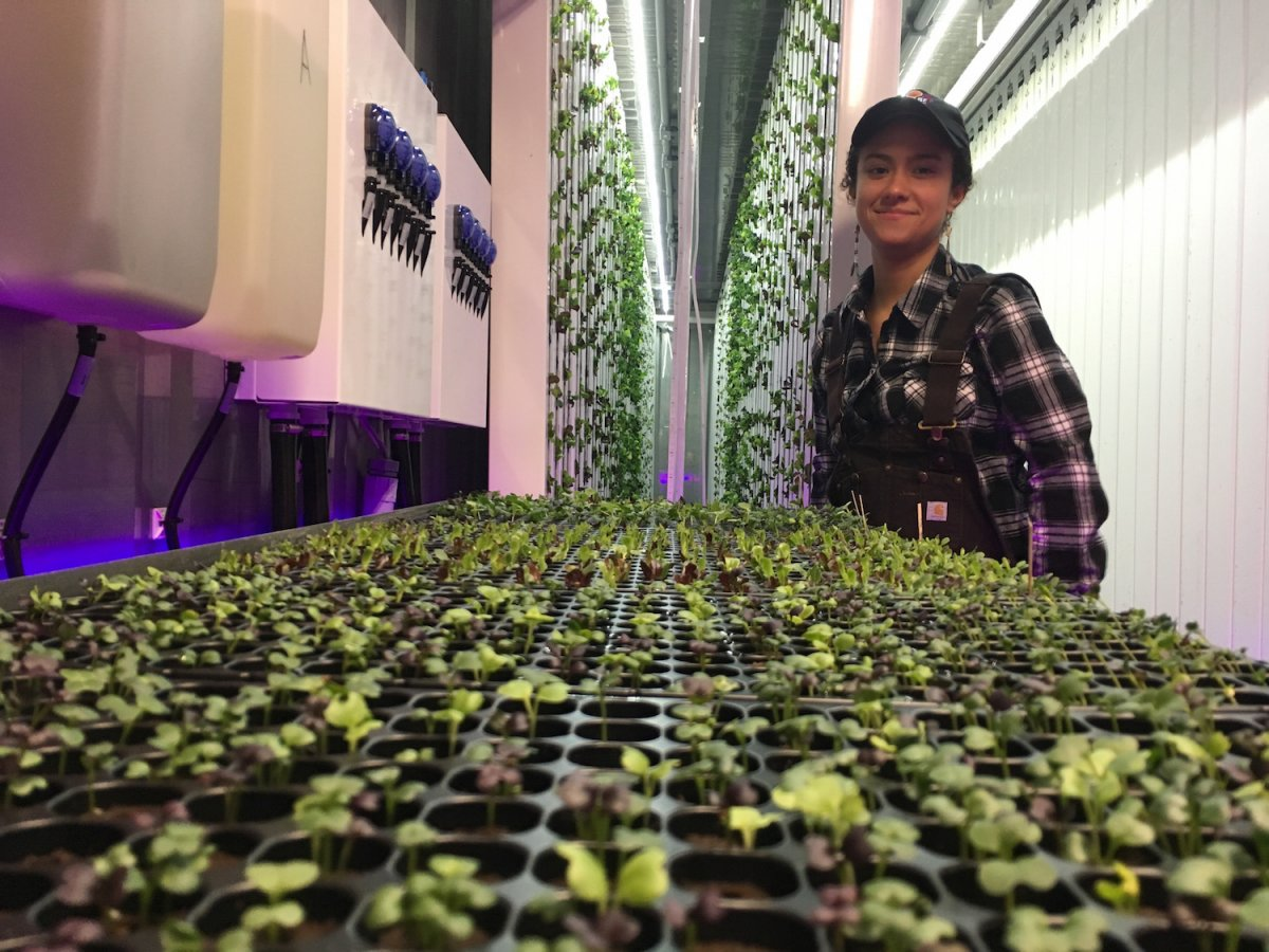 two-weeks-later-she-transplants-them-to-the-walls-we-should-be-growing-closer-to-us-in-cities-she-says