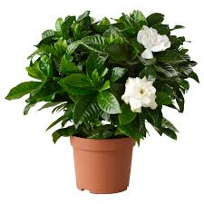 During A Joint Sales Call, Are You A Potted Plant?