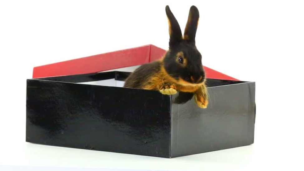 Getting Inside the Black Box: Harsh Realities of Selling to a Committee