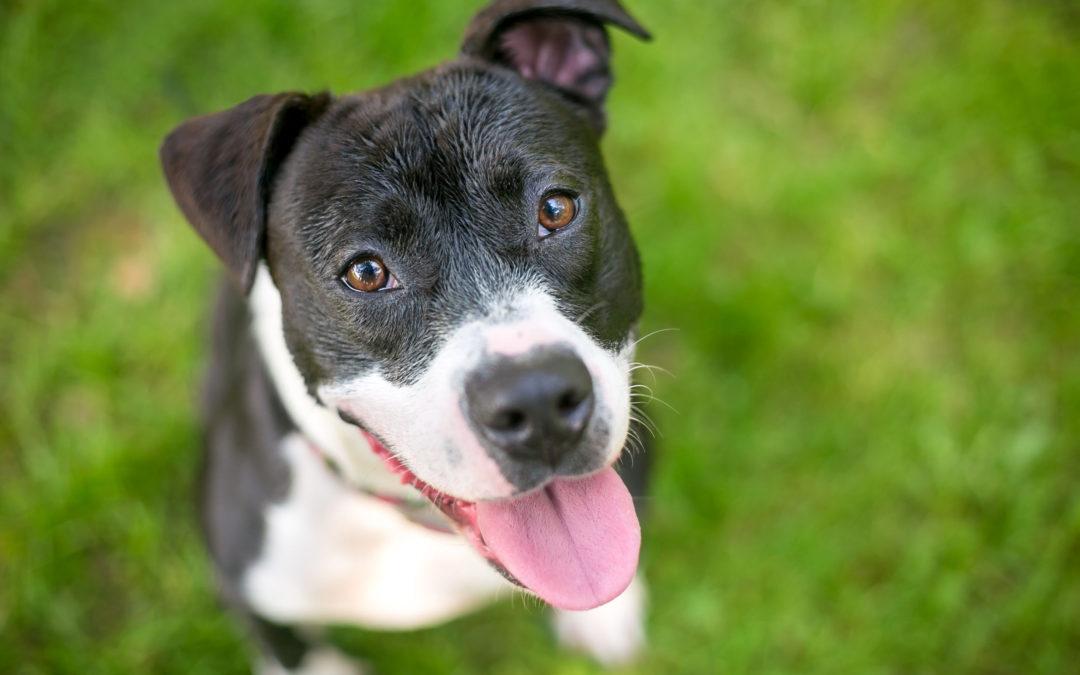 PetSmart Charities Invests in Yavapai Humane Society's Big Fix Program.