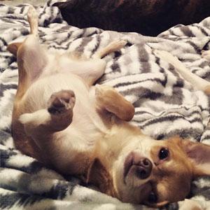 dog named ollie