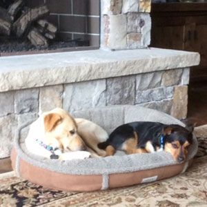 two dogs sleeping