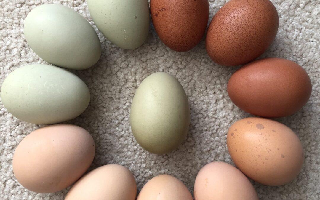 Local Farm Fresh Eggs Available Here