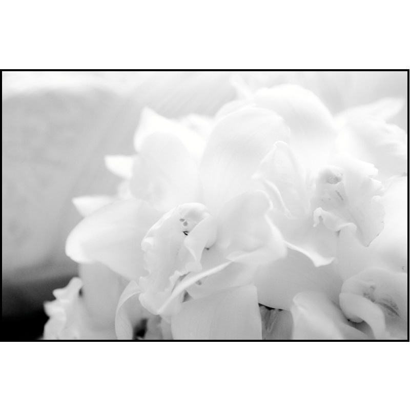 Floral Photography by David Hershy | GET FOUND ONLINE!