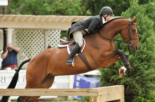 Fidelio | Ridden by Sara Rhodes, owned by Sarah Orr