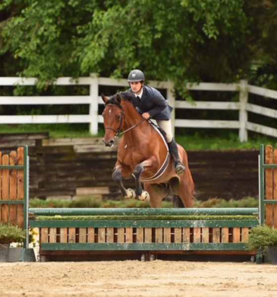 Quintos | Horse for sale