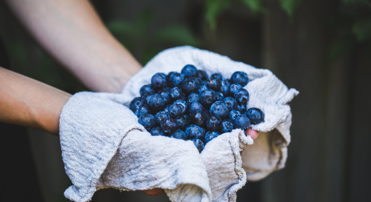 The 5 Best Foods For Better Brain Health | The Albert In Chicago