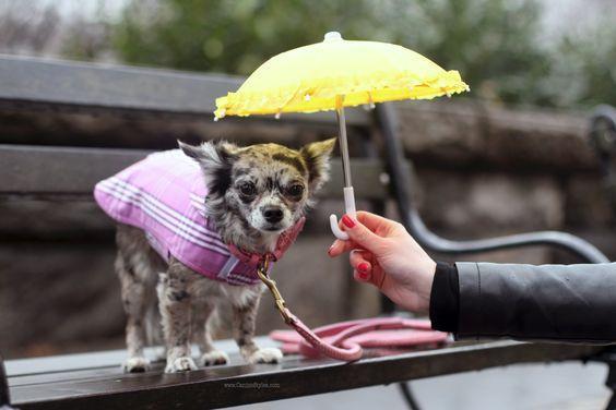 https://secureservercdn.net/198.71.233.197/f0f.f43.myftpupload.com/wp-content/uploads/2020/03/Dog-rain-coat-BlueSkyRain.jpg