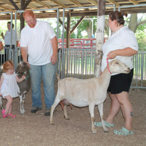 Goats being shown at the Ford County Fair in Melvin, Illinois