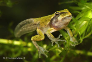 Home School Classroom: Amphibians @ The Science Center