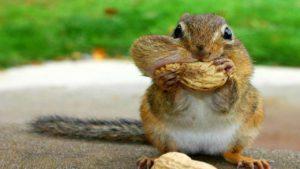 Free Again Wildlife Rehabilitation: Squirrels @ The Science Center