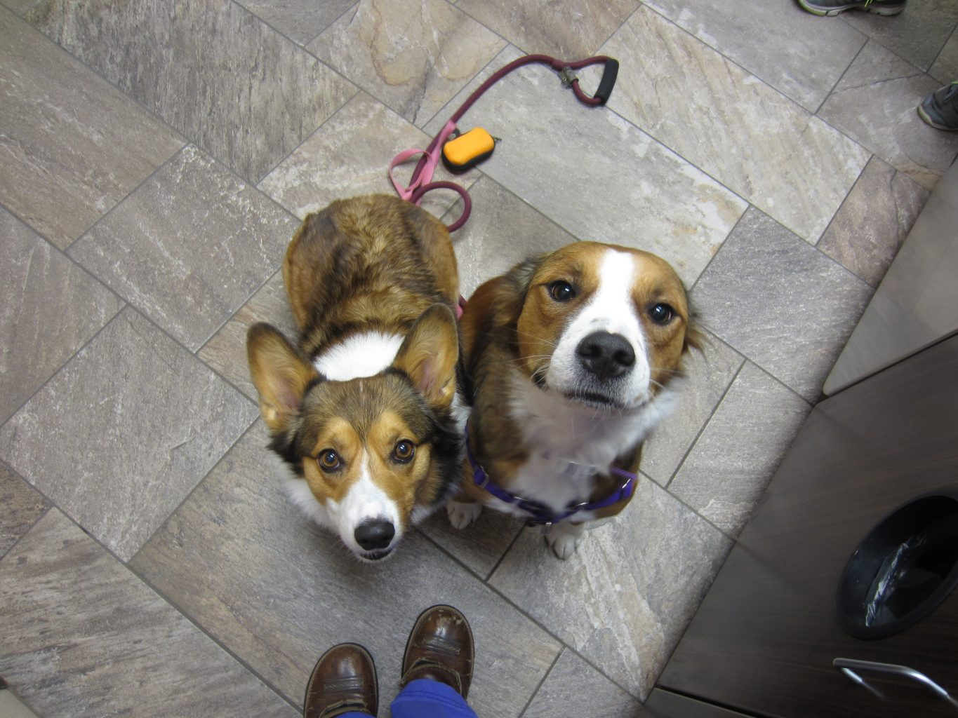 kaily and rhea- Corgy