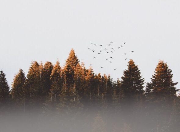 flock-of-birds-917494